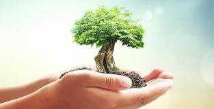 Detergenza Biodegradabile